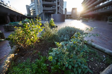 Urban gardening in the city square. Urban farming concept. Imagens