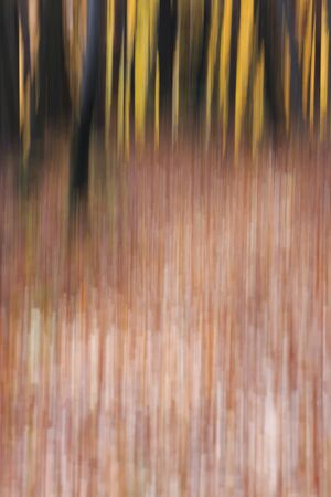 Blurry autumn colours in the forest. Banco de Imagens
