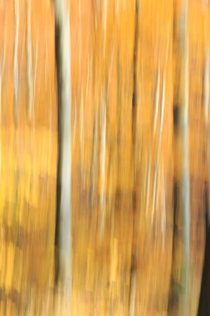 Pastel of blurry autumn colours in the forest. Banco de Imagens - 132228040