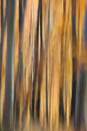 Pastel of blurry autumn colours in the forest. Banco de Imagens