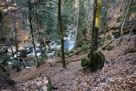 Wild forest with creek. Tree with gnarl. Ecology, natural environment and biomass concept. Banco de Imagens - 137598333