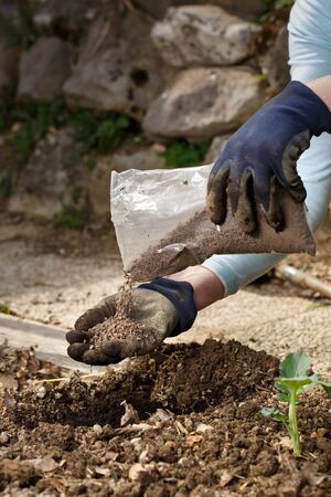 Gardener blending organic fertiliser humic granules with soil, enriching soil for plants to grow optimally. Organic gardening, healthy food, nutrients, self-supply, housework concept.