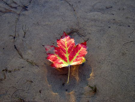 A floating Maple leaf