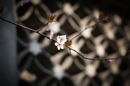 plum island: Flower