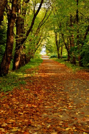 Autumn path in a park strewn with yellow leaves