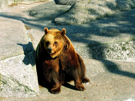 Brown bear in a zoo in Warsaw