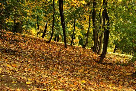 Golden autumn in the city park  Stock Photo