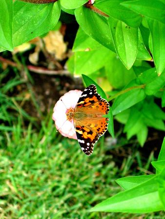 Beautiful butterfly on a lone flower in the garden