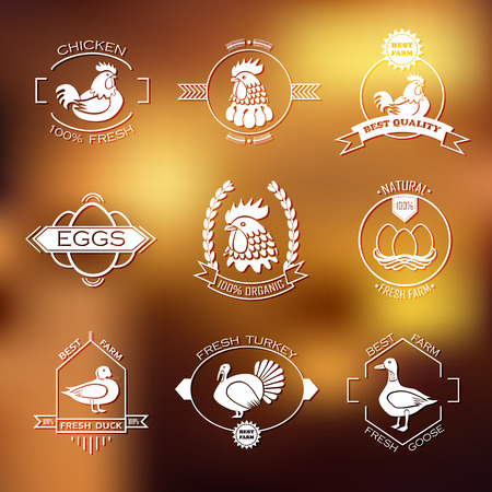 poultry animals: Set of poultry farm and emblem.
