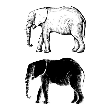 Hand Drawn African elephant in black and white silhouette