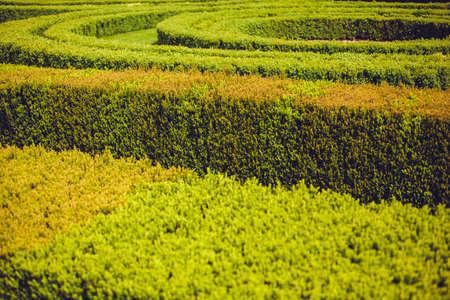 geometric design of a bush in a landscape in prague