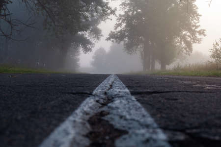 a terrible deserted road with old trees along it in thick fog. view from ground level. horror movie concept. Stock Photo