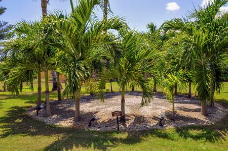 cana: Punta Cana, Dominican Republic - March 19, 2010: Territory of Hotel Catalonia Royal Bavaro in Punta Cana Stock Photo