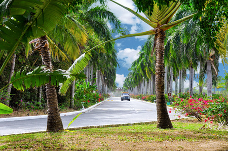 cana: The picturesque paved road in Punta Cana, Dominican Republic