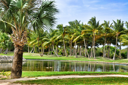 cana: Punta Cana, Dominican Republic - March 25, 2010: Territory of Hotel Catalonia Royal Bavaro in Punta Cana, Lake and palm trees