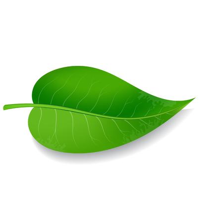 Green leaf on white background Vector illustration Ilustração