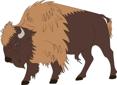 American buffalo or bull on white background. Vector illustration  イラスト・ベクター素材