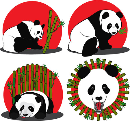 Set of images of Panda - a bamboo bear. Vector illustration