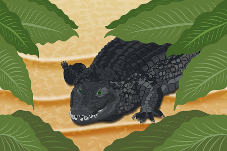 Ð¡rocodile on the sand under green leaves. Vector illustration