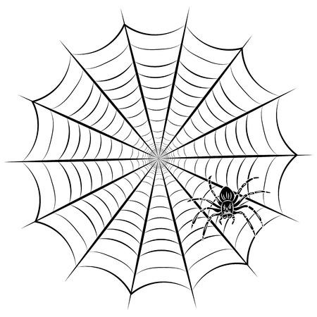 Spider web and spider. Vector illustration