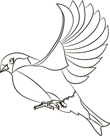 Contour Flying bullfinch isolated on white background