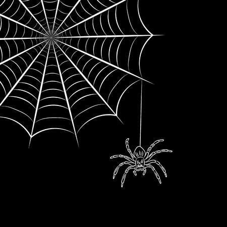 Spider web and spider. Vector illustration