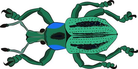 Beetle Eupholus cuvieri in the family Curculionidae. Vector illustration Ilustração