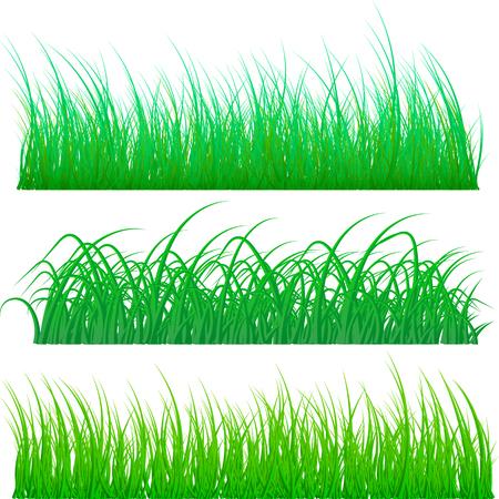 Different types of green grass isolated on white background. Vector illustration Ilustração