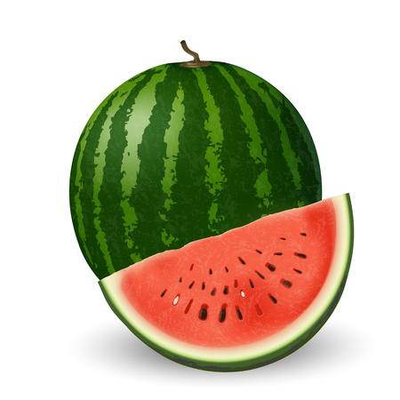 Realistic watermelon and slice on white background. Vector illustration Ilustração