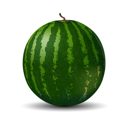Realistic full watermelon on white background. Vector illustration