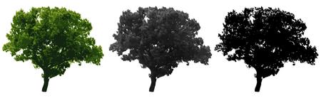 Tree isolated on white background. Vector illustration Ilustração