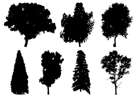 Silhouettes of different trees: oak, spruce, fir, birch, aspen, ash, maple, platan. Vector illustration Ilustração