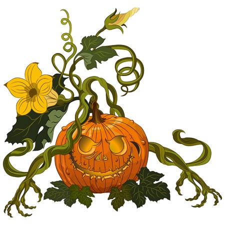 Halloween scary pumpkins isolated on white background. Vector illustration Ilustração