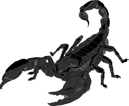 Scorpion isolated on white background. Vector illustration