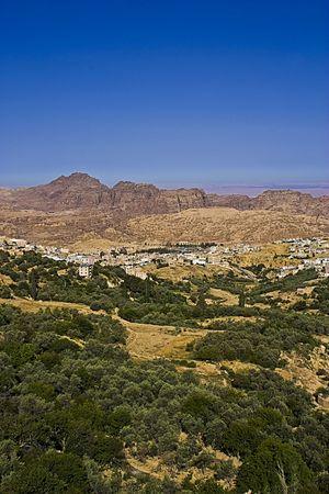 Olive Farms near Petra - Jordan