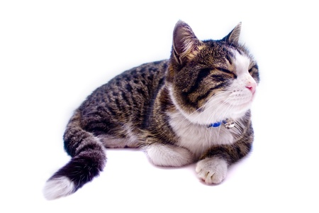 Cat taking a nap over white background Stock Photo