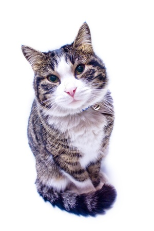 Cat staring in to camera Stock Photo