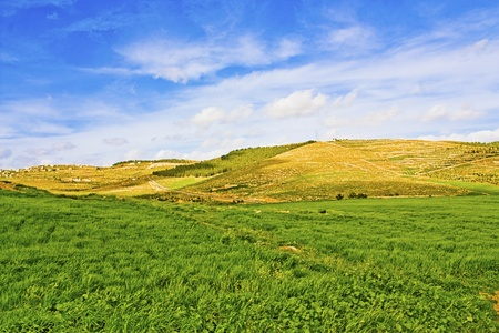 Green pastures and grazing land at the Jordan countryside