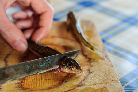 country kitchen: Cleaning and gutting little river fish in country kitchen