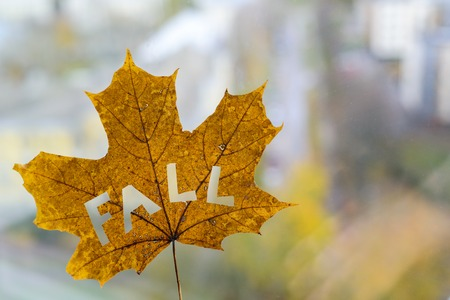 Maple leaf with word FALL  with city park on background Stock Photo