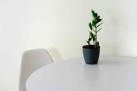 Part of white room interior. Round table, white plastic chair and green plant in black pot. Copy space