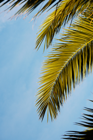 Palm leaves with sky. Tropical summer, sunny day. Vertical. Text space