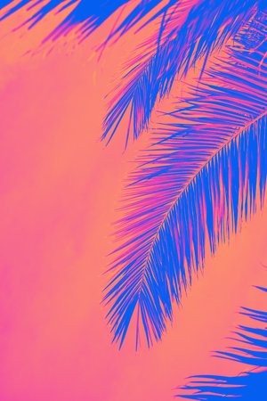 Palm leaves with sky. Tropical summer, sunny day. Vertical. Text space. Toned with neon pink , coral and blue