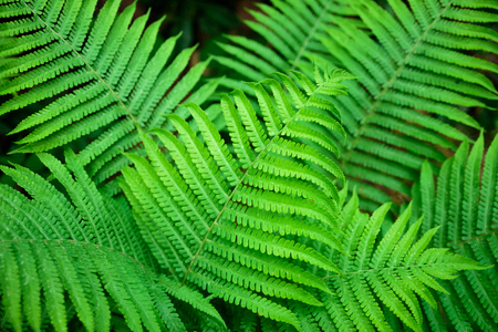Growing fern leaves in forest. Fresh and vibrant
