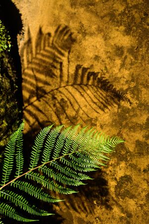 Fern leaf with its shadow. Hard light, sunny day. Nature