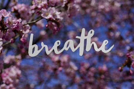 Word BREATHE with blooming cherry tree on background. Pink flowers. Lettering