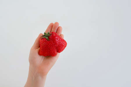 Ugly strawberry fruit in hand. Reduce food waste concept