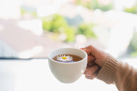 Cup of calming chamomile tea in woman hands in knitted sweater . Warm sunny autumn day