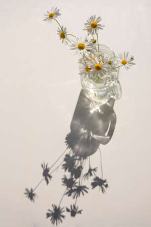 Bouquet of wild daisies in glass jar on white table at sunny day