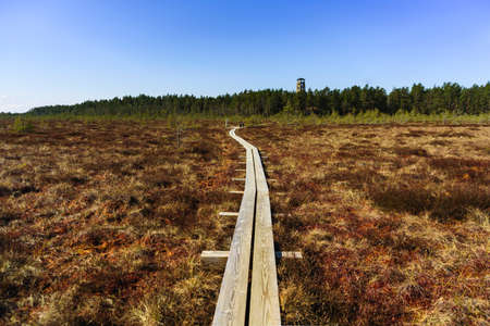 Hiking wooden trails in pine forest and swamp, Estonia Standard-Bild